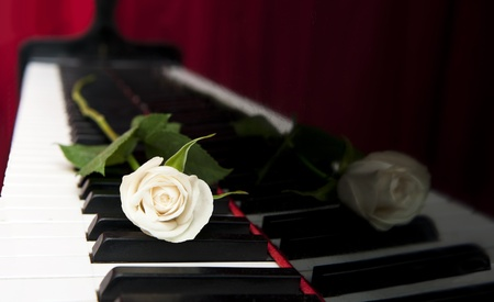 A white rose lies on the black keys of a grand piano, with a red curtain in the background, reflected in the black lacquered wood. Romantic, classical music concept photo