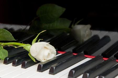classical music: Rose op het toetsenbord van een vleugel, weerspiegeld in de gelakt hout. Klassieke muziek begrip