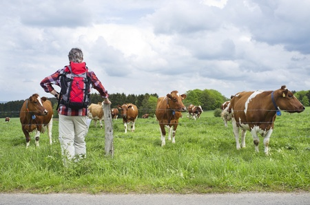 Rear view of a hiker standing by a countryside farmland with cows grazing photo