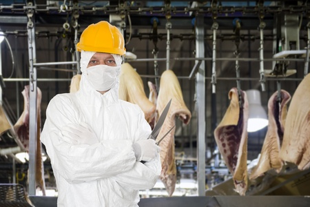 food safety: Industrial butcher posing with two filleting knives, wearing protective and hygienic clothing