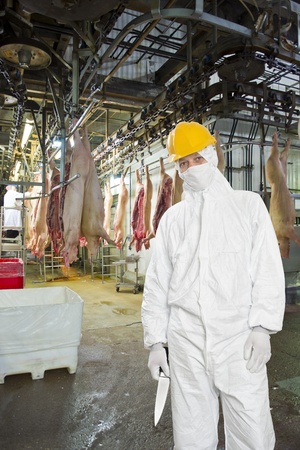 Butcher, wearing hygienic clothing, including a white suit, mouth piece or mask, and hard hat standing on front of the carcasses of slaughtered pigs, carrying a knife in a large meat processing plant