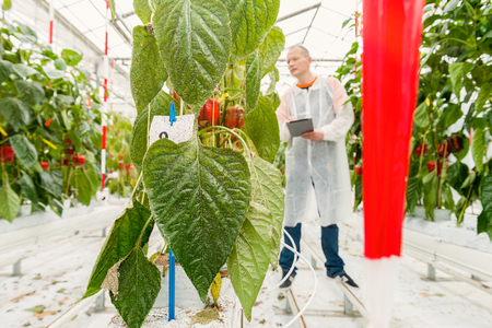 botanist researches the test facility for pest control