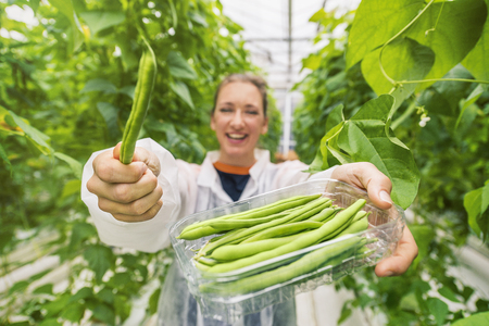 Young female shows fresh picked green beans in a greenhouse