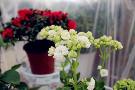 glower: Spring flowers