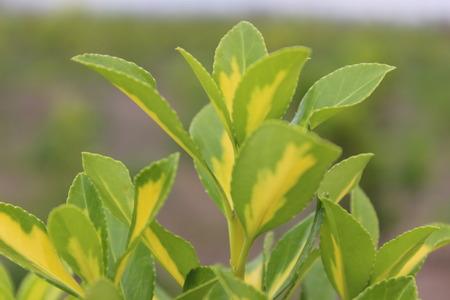 spring leaf: Spring leaf Stock Photo