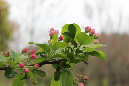 tiny: Plant with tiny pink flowers