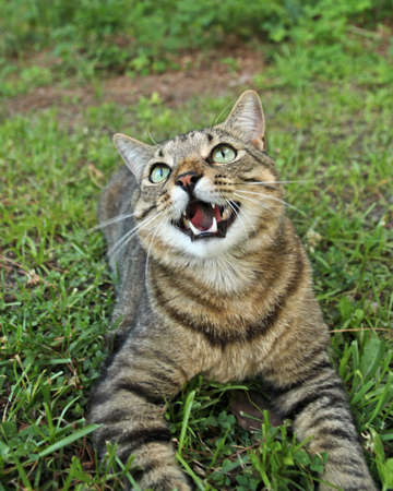 domestic: Domestic Cat Outside Stock Photo