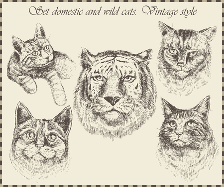 Set domestic and wild cats. Vintage style