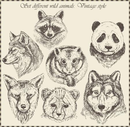 vector set: different wild animals - various vintage style.