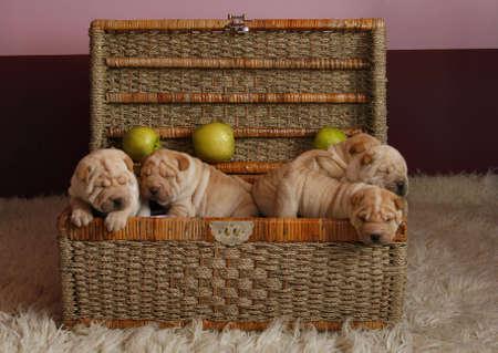 puppys in basket photo