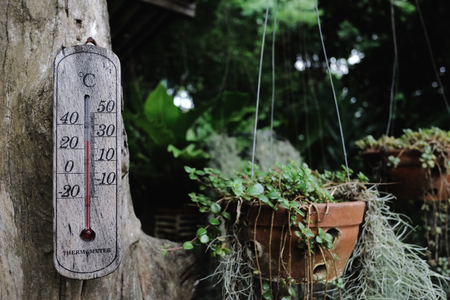old mercury: Wood Thermometer in Garden