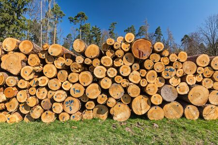 Pile of logs in the forest