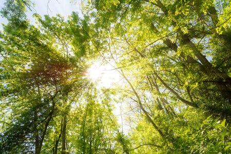 Sun shining through treetops in the summer
