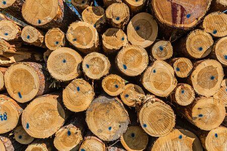 Nahaufnahme eines Haufens von Baumstämmen