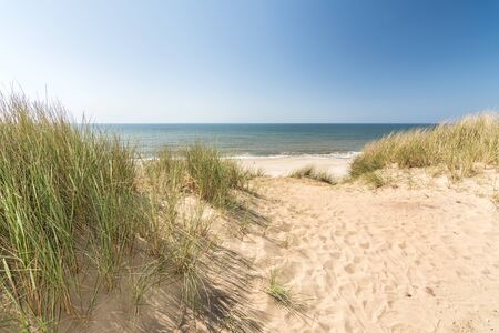 Beach grass in dune landscape with beach and ocean in the background Stock fotó