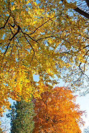 Background: Colorful leaves on treetops during Indian Summer
