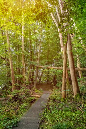 Romantic foot path through green enchanted forest
