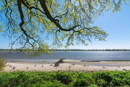 Tree branches overhanging the beach at the Elbe river in Wedel, Germany Фото со стока