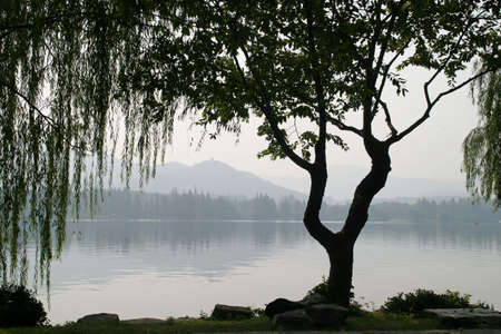weeping willow: A tree silhouette shows a tragedy with views of the lake.