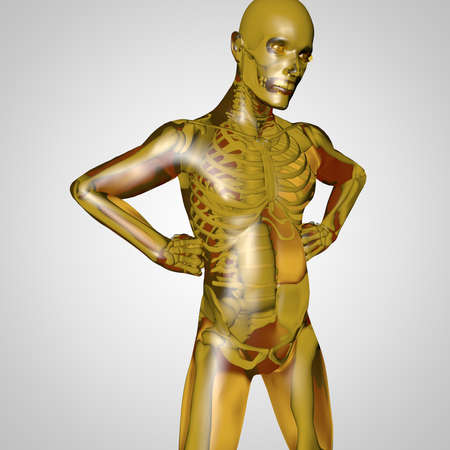 marvel: The human body is a marvel of nature with all the organs, the skeleton and the transparent skin Stock Photo