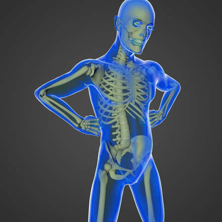 cardiovascular disorders: The human body is a marvel of nature with all the organs, the skeleton and the transparent skin Stock Photo
