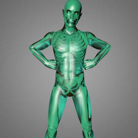 El cuerpo humano es una maravilla de la naturaleza con todos los órganos, el esqueleto y la piel transparente Foto de archivo - 18811686