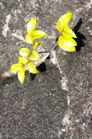 Granite rock with flower photo