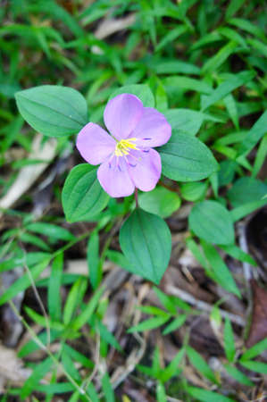 small purple flower: Small Purple Flower in Green Coat Stock Photo
