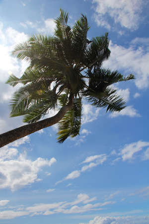 directly below: Sunlit palm tree with clouds in the sky