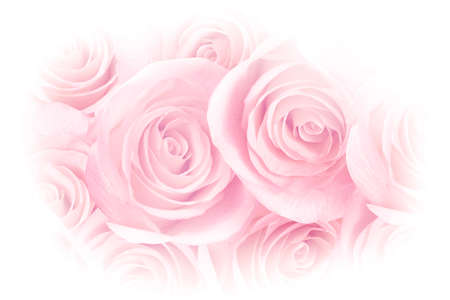 Pink Rose Petals Photo Background Stockfoto