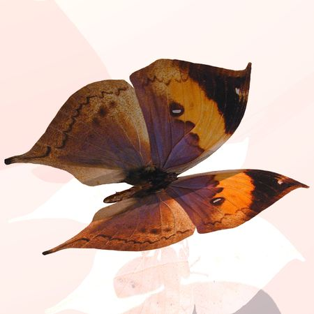 belle: Rendered image of a beautiful butterfly - with Clipping