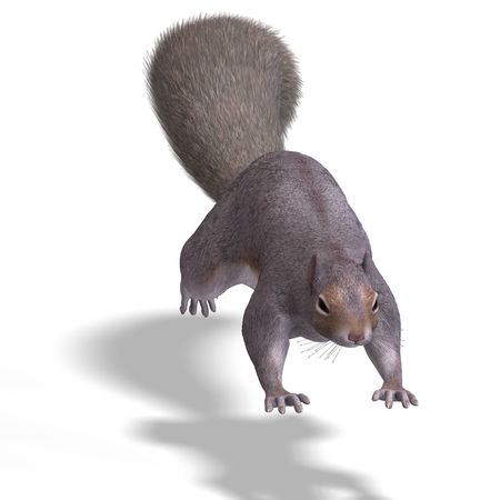 saltation: Rendering of a cute Squirrel with Clipping Stock Photo