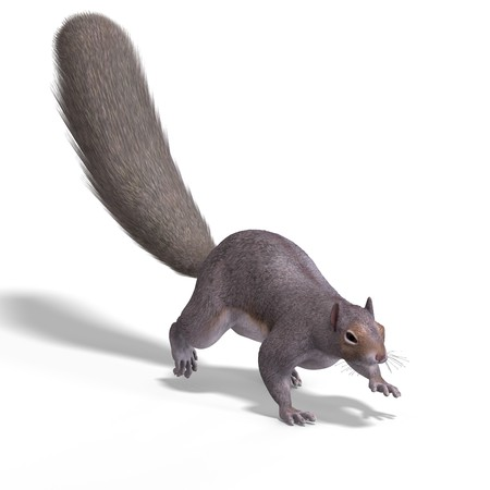 Rendering of a cute Squirrel with Clipping Stock Photo - 5006800