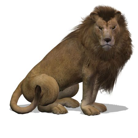 big cat: Dangerous Big Cat Male Lion With Clipping Over White Stock Photo