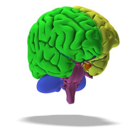 ilustraci�n esquem�tica de un cerebro humano con saturaci�n camino