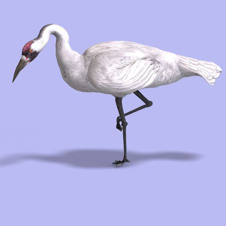 pecker: great white crane on blue back With Clipping