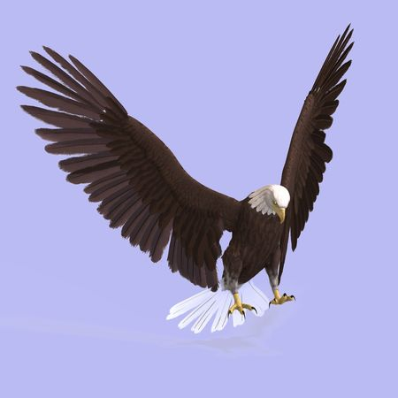 computer attack: huge eagle with feathers With Clipping Stock Photo