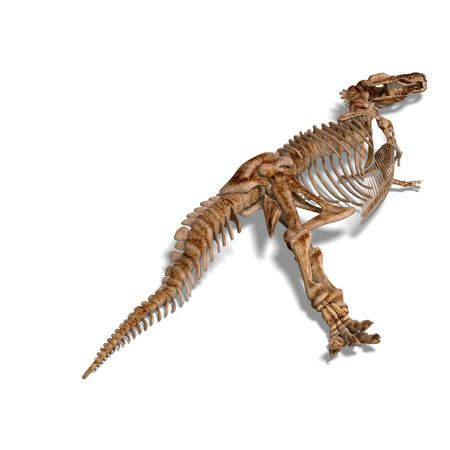 gigantic: rendering of a t-rex skeleton with Clipping and shaow over white