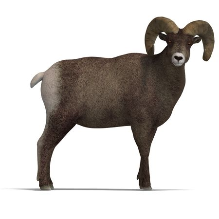 upright: an aries ram with twisted horns. 3D render with clipping and shadow over white
