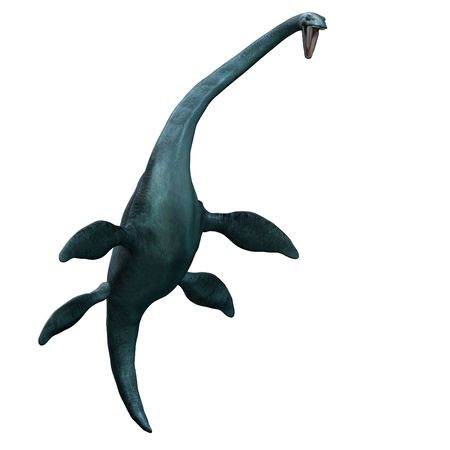 rendering of the giant sea dinosaur Elasmosaurus with Clipping over white photo