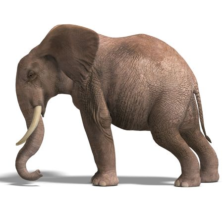dozing: giant elephant. 3D render with clipping and shadow over white Stock Photo