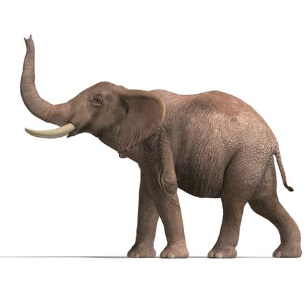 giant elephant. 3D render with clipping and shadow over white Stock Photo