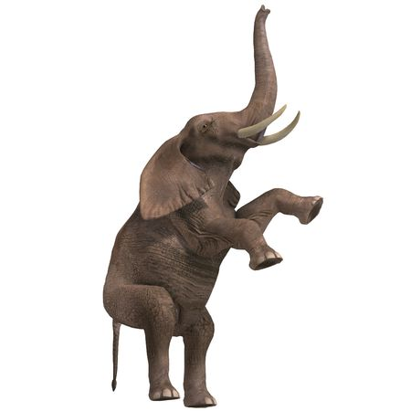 enormous: giant elephant. 3D render with clipping and shadow over white Stock Photo