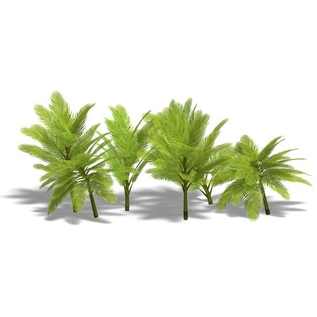 frond: 3D render with clipping and shadow over white
