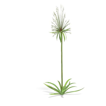 leaved: papyrus bush. 3D render with clipping and shadow over white