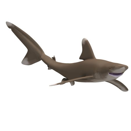 flotating: dangerous shark. 3D render with clipping and shadow over white