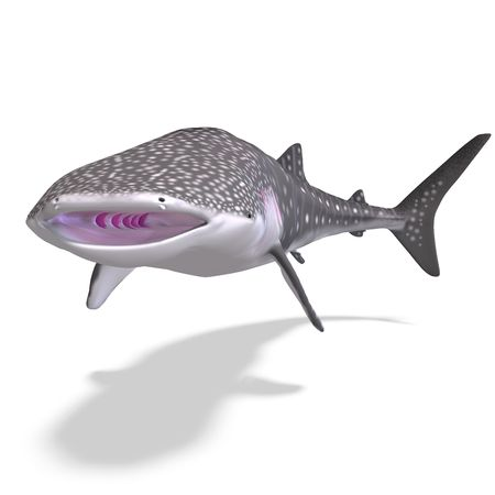 flotating: whale shark. 3D render with clipping and shadow over white