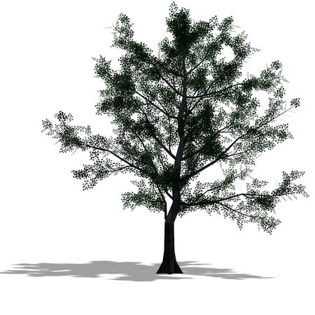 leaved: rendering of a tree with shadow and lipping over white Stock Photo