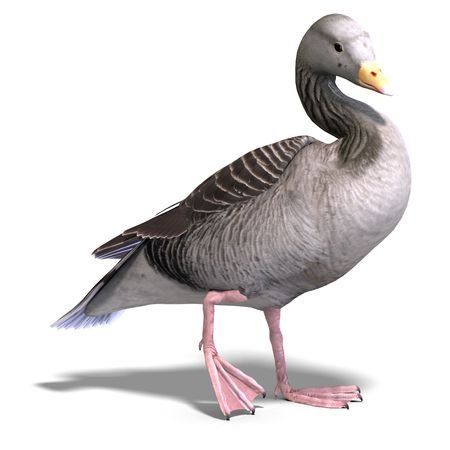anatidae: 3D rendering of a grey goose over white
