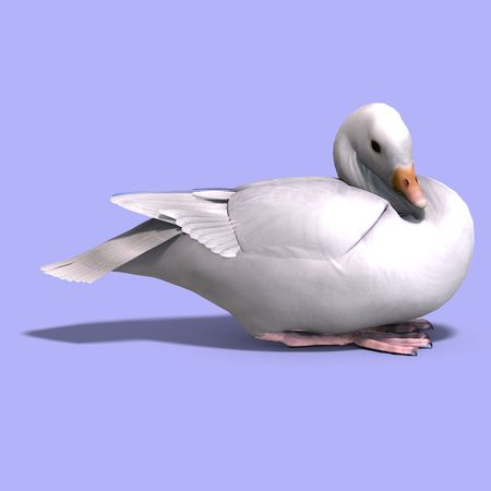 anatidae: 3D rendering of a snow goose over white